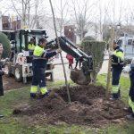 Ciudad Real: El Ayuntamiento repondrá los árboles talados que suponían «un riesgo de seguridad»