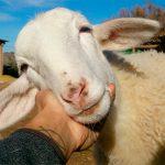 La Frontera, el primer santuario de animales de granja de Ciudad Real