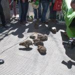 Manifestación ASAJA en Ciudad Real 42