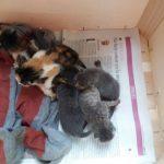 Gatómicas pide ayuda urgente ante una avalancha de gatitos abandonados