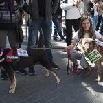 manifestación contra el maltrato animal 18