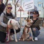 manifestación contra el maltrato animal 19