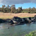 La Mancomunidad del Gasset reclama a la CHG que retire los plásticos negros amontonados en el embalse
