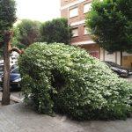 Ciudad Real: La tormenta provoca la caída de la copa de un árbol en la calle La Mata