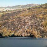 Puertollano: Vecinos de Ciudad Jardín reclaman más medidas para la prevención de incendios