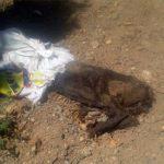 Puertollano: Apedreado dentro de una bolsa