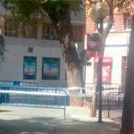 Perimetrado por seguridad un árbol de la plaza del Pilar