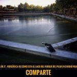 Nuevas quejas por la suciedad de las aguas del lago del Parque del Pilar
