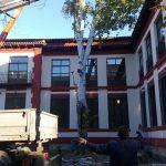 Adiós al chopo del colegio Carlos Eraña