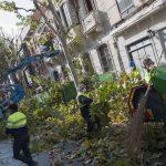 Ciudad Real: Aprobadas podas específicas para minimizar alergias