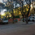 Ciudad Real: Operarios municipales podan el arbolado del colegio Carlos Eraña