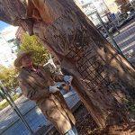 Una triste figura emerge del tronco del viejo olmo que guarda la entrada del Gasset