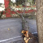 Una rama de grandes dimensiones cae en el patio del Carlos Eraña justo antes de la salida de los niños