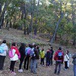 Puertollano: Ruta senderista de El Ilustre Minero a uno de los robledales menores conservados