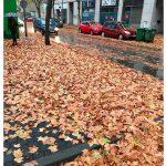 Ciudad Real: Horas extraordinarias para el barrido de hojas