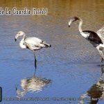 Ecologistas en Acción-Valle de Alcudia organiza una ruta senderista ornitológica-cultural:Ermita del Santo Niño-Lagunas de La Guardia-La Guardia (Toledo)