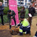 """Plantado el """"Olmo de los Pandorgos"""" en los Jardines del Prado"""