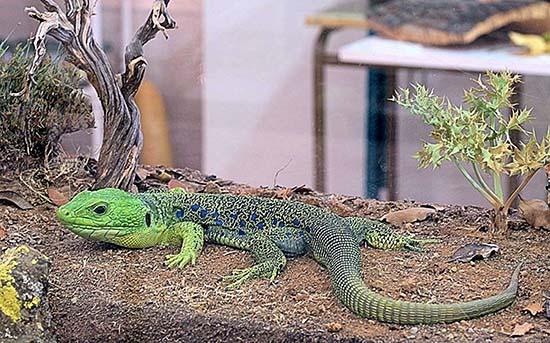 VISO_Exposición reptiles y anfibios_foto Prudencio Morales