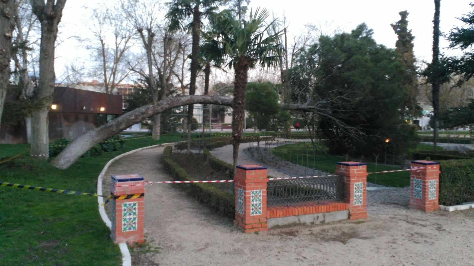 arbol parque de gasset 1