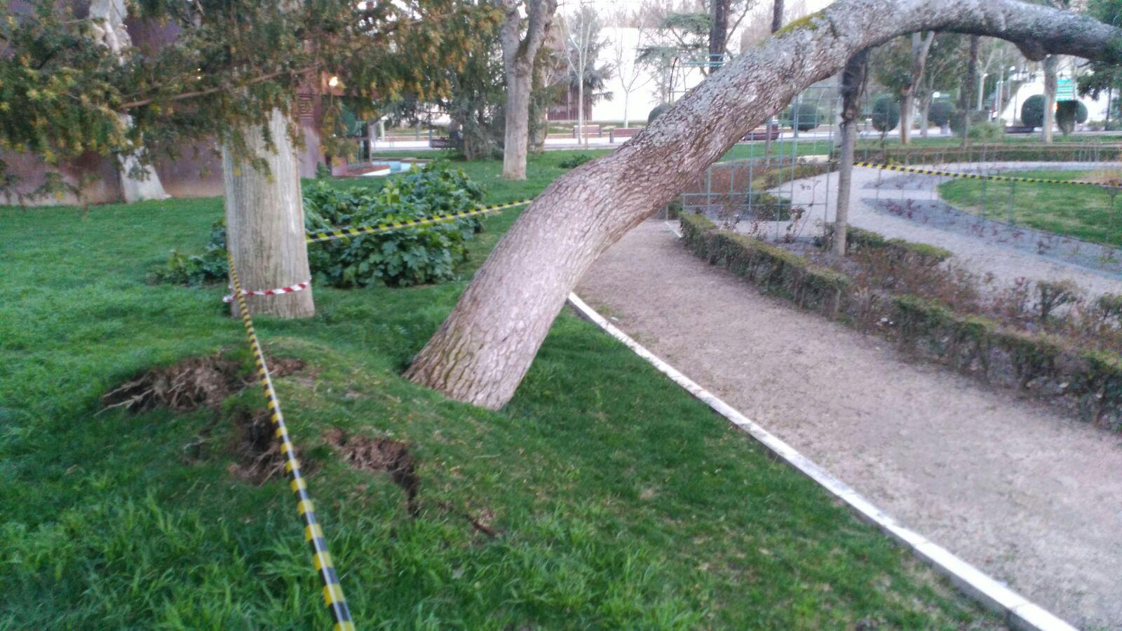 arbol parque de gasset 2