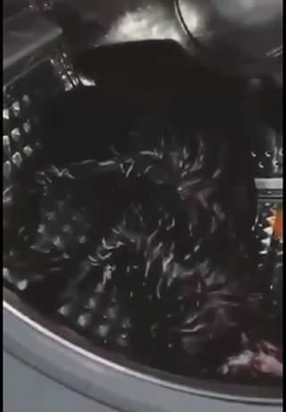 gatolavadora2