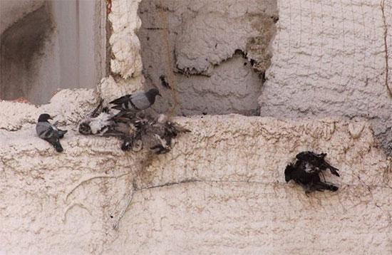 palomas-plaza-cervantes-1