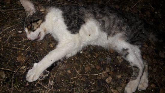 Gato 2 muerto