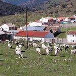 Cónclave ganadero comarcal este jueves en Brazatortas de cara al futuro PRUG del Parque Natural del Valle de Alcudia