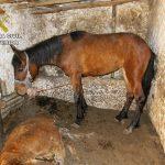 La Guardia Civil investiga a una persona tras hallar cuatro caballos muertos en cuadras de Calzada de Calatrava