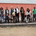 El perro perdiguero de Burgos, estrella en FERCATUR 2018 por su nobleza y corpulencia