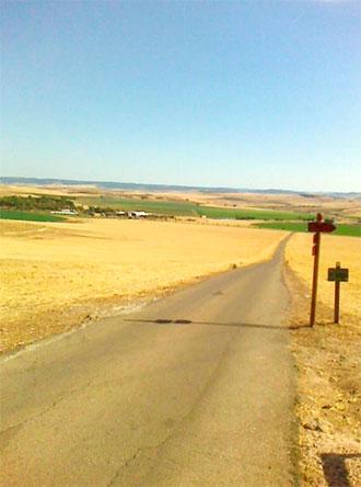 Vista del Campo de Batalla desde el cerro de Alarcos donde estaría la caballería cristiana, en julio