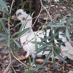 Comunicado: Preocupación por la protección animal en las Pocitas del Prior de Puertollano