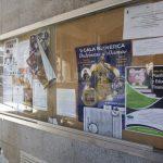 Ciudad Real: Alegato a favor de los gorriones de un ciudadano anónimo y reflexión acerca de los modernos sistemas de limpieza