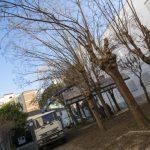 Ciudad Real: Comienzan los trabajos en el futuro parque Manuel Marín