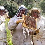 La diversidad floral del Valle de Alcudia y Sierra Madrona genera unas mieles excepcionales