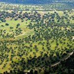 Ecologistas en Acción pide modificaciones sustanciales en el borrador del plan rector del Parque Natural del Valle de Alcudia