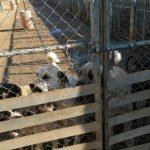Ciudad Real: La protectora La Bienvenida, colapsada, suspende la acogida de animales