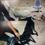 Ciudad Real: Detenido por dejar a sus tres perros en un estado de lamentable inanición