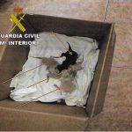 Investigado un vecino de Socuéllamos por abandono de gatos recién nacidos