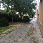 Árbol y limpieza en la calle Victoria Kent