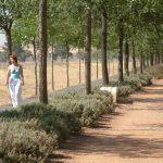 Ciudad Real: El Pleno aprueba por unanimidad ampliar la iluminación de la vía verde