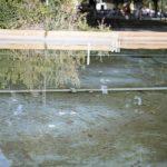 Cuatro fuentes ubicadas en el parque de Gasset y el Torreón, en Ciudad Real, dan positivo en legionela