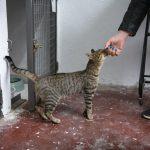 Llegan los primeros ejemplares al centro felino de Ciudad Real gestionado por Gatómicas