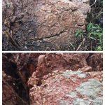 Hallan en Puertollano nuevos fósiles de gusanos arenícolas